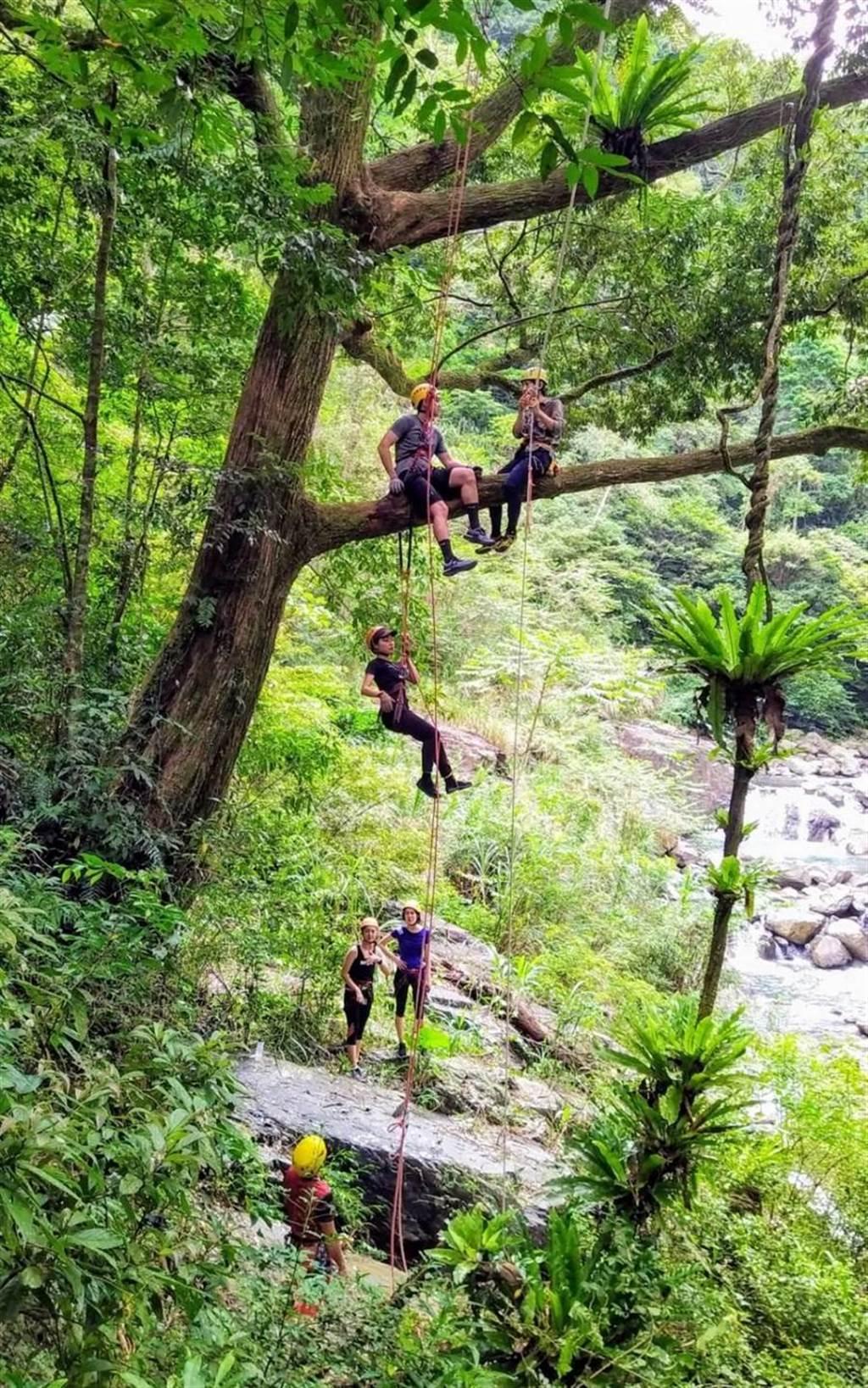 「動感山徑玩樂體驗組」包含攀樹、滑索、平衡走繩及溯溪等。(小鬍子冒險學校提供)