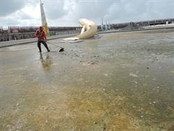 嘉義東石海之夏下周登場 環境問題令人堪憂