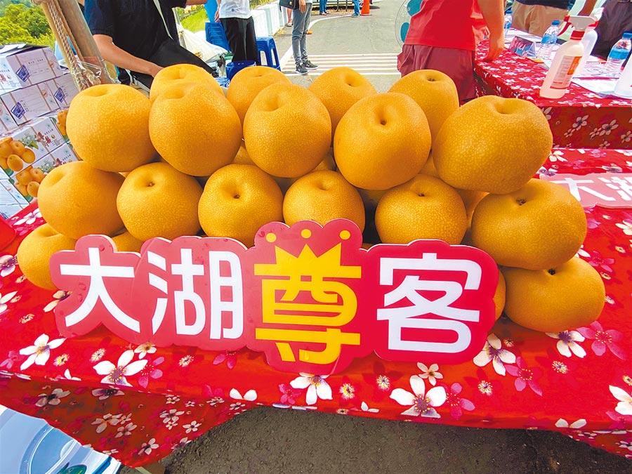 苗栗縣高接梨陸續盛產,大湖鄉的豐水梨果形飽滿、多汁香甜。(巫靜婷攝)
