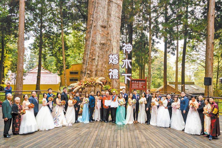 2019年神木下婚禮來自各國的新人在神木前合照。(阿管處提供/張亦惠嘉縣傳真)