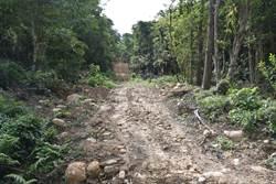 縣府積極保護石虎 財團卻大肆破壞石虎棲地