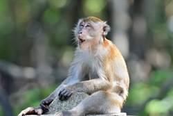 正妹遭獼猴當眾脫衣 伸手解褲頭還頭埋雙峰