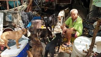 老人助狗花光積蓄 網友捐款整建狗園