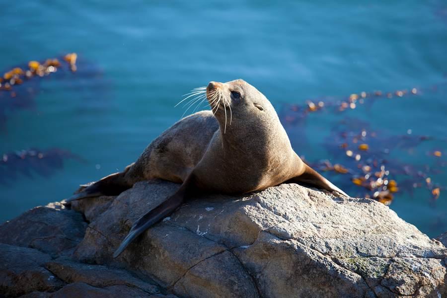 野蠻遊客為讓小孩合照 竟用棍棒石頭猛揍海豹30秒至昏死 (示意圖/達志影像)