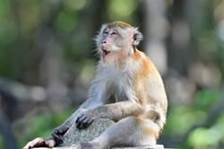 小猴色瞇瞇見正妹竟強行脫她衣褲 頭埋雪乳猛聞香