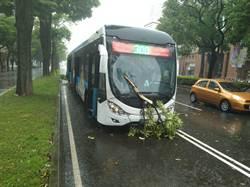 樹又倒!中市狂風暴雨 台灣大道行道樹倒塌插公車窗