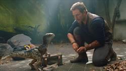 《侏羅紀世界3》爆劇組染疫 電影公司:子虛烏有