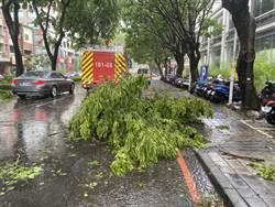 台中暴雨路樹折枝傷騎士 市府將協助申請國賠