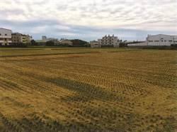 稻草剪段翻耕每公頃賺千元 露天燃燒最高罰10萬