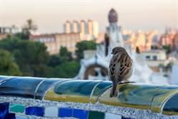 達爾文進城來了:新物種誕生!都市叢林如何驅動演化?