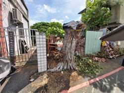 彰化台鐵舊宿舍群露曙光 確定拆除18棟 包商卻先砍樹了...