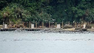 百餘隻「鳳頭燕鷗」現身基隆正濱漁港 引民眾搶拍