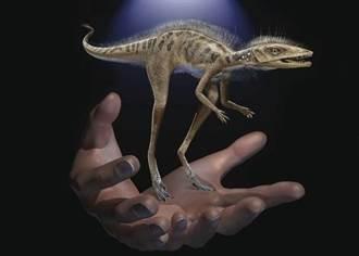 超萌!「小蟲子殺手」迷你恐龍體形比手機還小