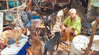 花光積蓄護犬 8旬翁受助建家園