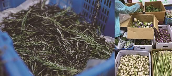 濱江市場內,歐式、東南亞式香草一應俱全,像是迷迭香(左)、小圓茄(右)、嘎拋葉、百里香,堪稱台北的香料寶庫。( 右圖/陳愛玲)