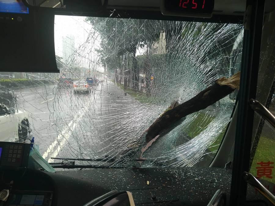 公車正行駛在文心路與大墩路之間的台灣大道,忽然一棵黑板樹的樹枝在風力下,倒伏後插入公車的車窗。(台中市府提供/盧金足台中傳真)