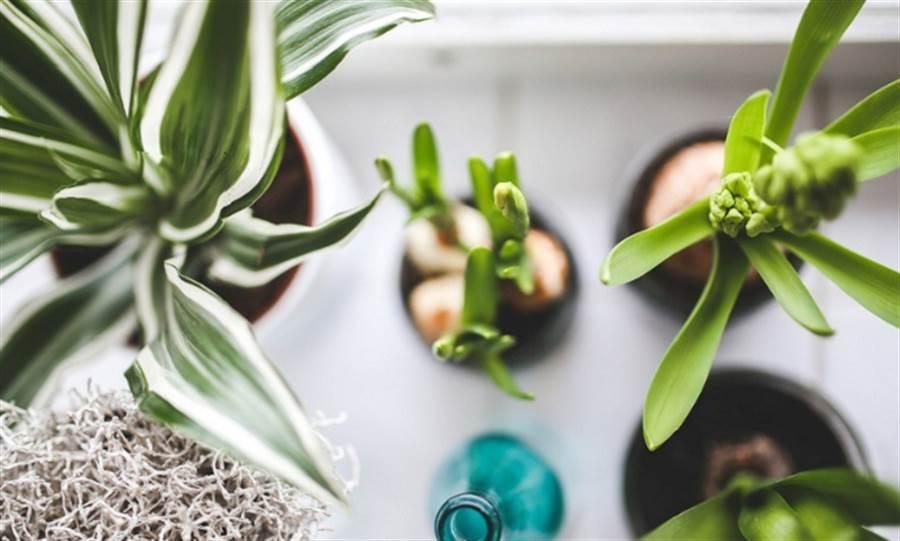 室內放幾盆植物,能幫助你紓壓好眠。(圖/pixabay)