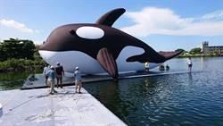 虎鯨「游」進水景公園 15日開幕吸引暑假人潮