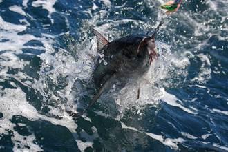 水庫捕到87公斤魚王 魚鱗硬到用鋤頭刮