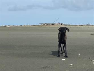 驚!「狗狗版的魯濱遜漂流記」活生生在外傘頂洲上演