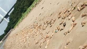 噁!海灘布滿豬腳、不明屍塊 恐怖景象嚇壞居民