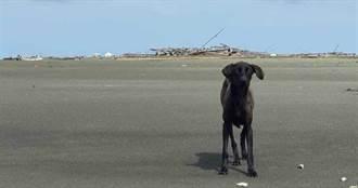 生命力頑強!浪浪徘徊孤島1年多 皮包骨、多病纏身苦等救援