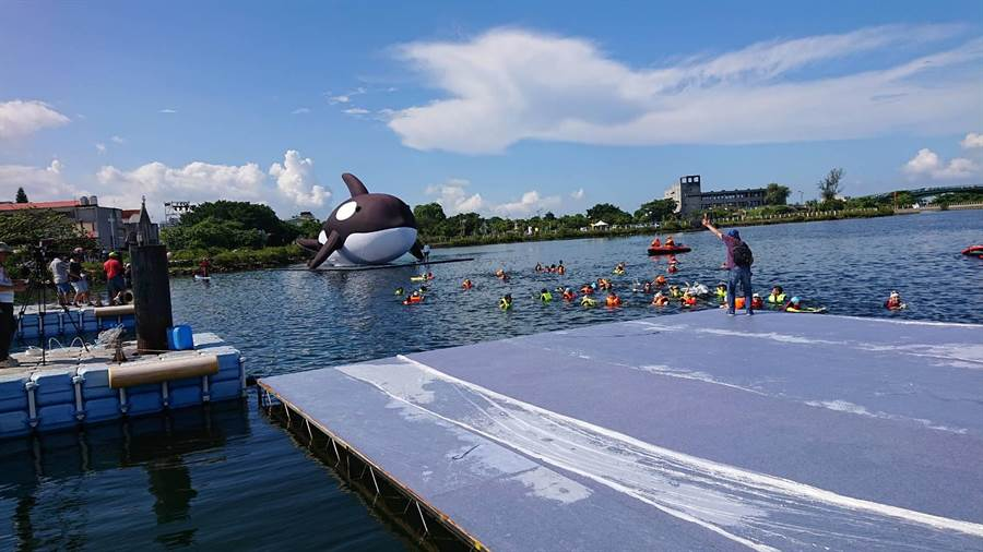 安平虎鯨在民眾伴游下,「游」進安平水景公園。(程炳璋攝)