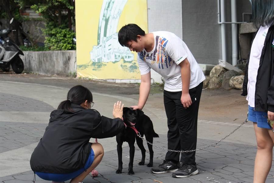 台北市復興高中去年底認養校園犬「復校長」,深受師生喜愛。(新北市動保處提供/張立勳台北傳真)