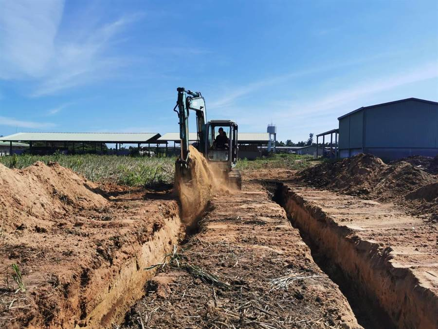 縣府今展開第2階段預防性撲殺、銷毀準備工作,包括場地整理及風倒木進場堆置。(縣府提供)