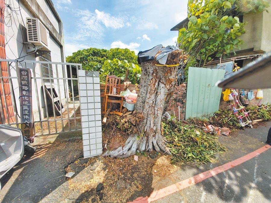 彰化台鐵舊宿舍群登入文化景觀,樹木卻被攔腰修剪,掀起爭議。(吳敏菁攝)