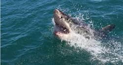 凶猛巨鯊衝出水面!15歲衝浪客「雙腿瞬間消失」血染大海