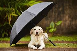 金毛超市外等主人突下雨 警衛暖幫撐傘感動萬人