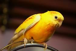 鸚鵡見鏡頭飆「暴風Rap」 超狂節奏感百萬人笑翻