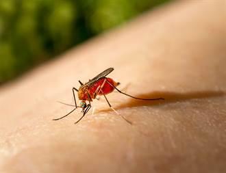 影》切除蚊子1器官 牠竟吸血吸到肚子炸裂