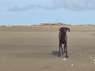 狗版魯賓遜漂流 外傘頂洲困1年