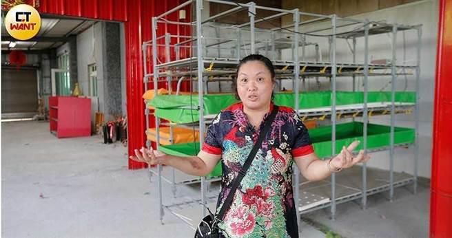 黃婦說,她先後花費了一千多萬元,在原有農舍旁搭建鐵皮屋頂,並在鐵皮下建構水耕設備。(圖/黃耀徵攝)