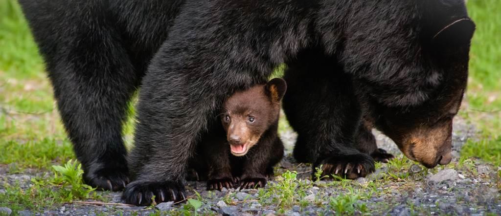 黑熊示意圖。(圖/達志影像)
