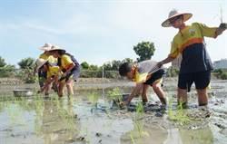 體驗農夫生活 小學生作伙來插秧