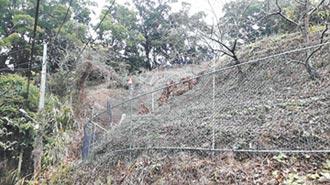 太平枇杷專區 設電網防猴害