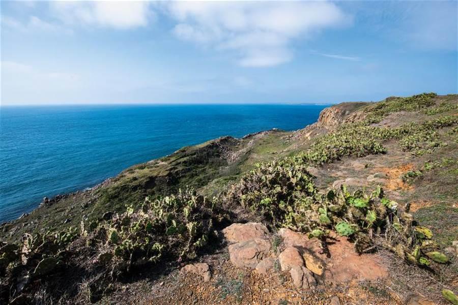 澎湖西嶼的外垵岬角上,有整片的仙人掌生長。(圖/莊坤儒 台灣光華提供)