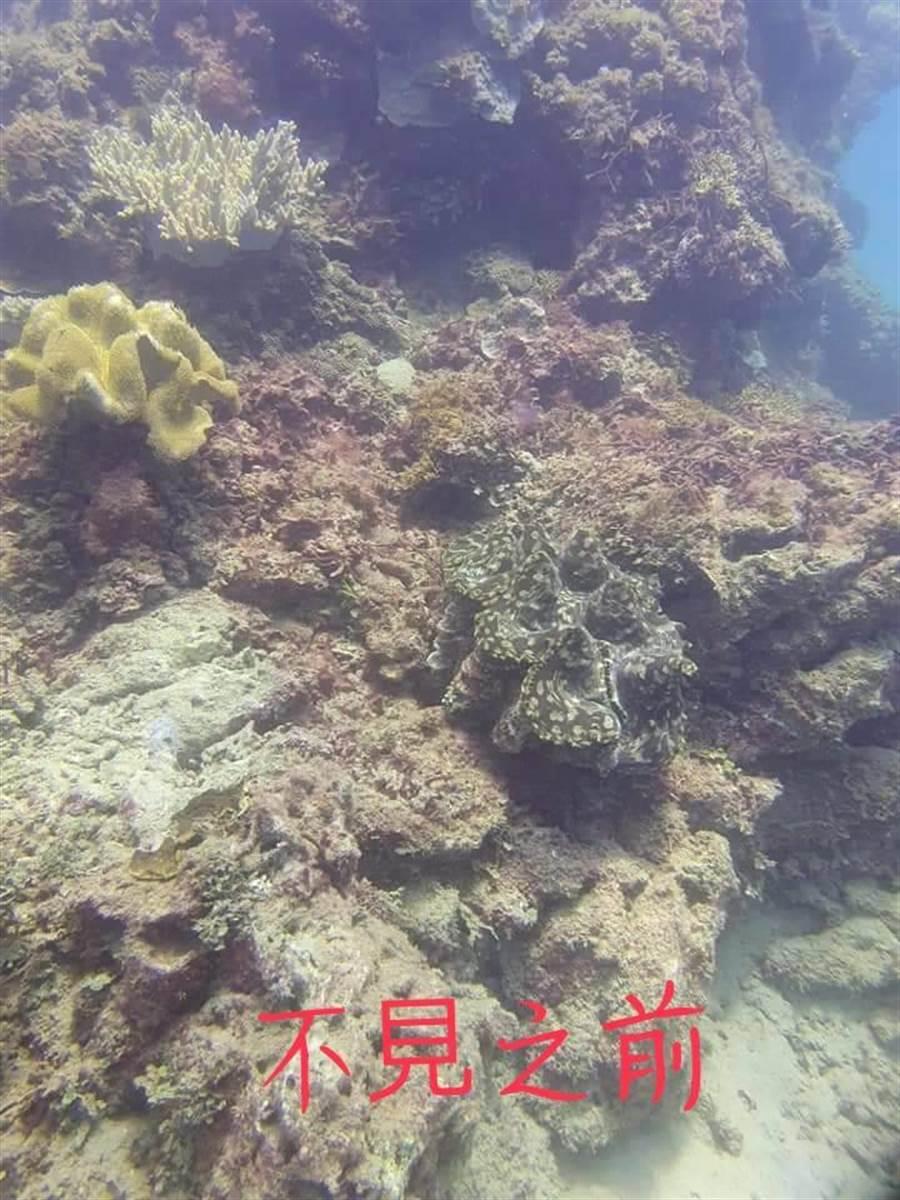 巨大硨磲貝失蹤4天尋獲,墾管處將查是否人為。(讀者圖供/謝佳潾屏東傳真)