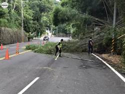 台3線黑葉竹林倒塌 警協力清除搶通