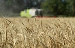 聯合國:1.3億人可能因新冠陷入飢餓