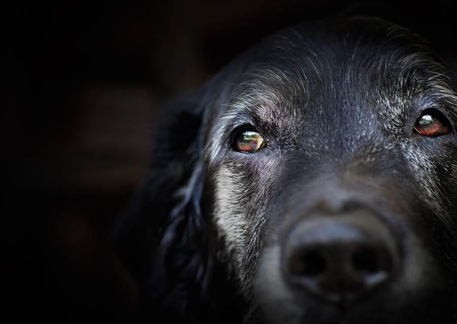 他丟10年愛犬回收容所 留1紙條全場鼻酸(示意圖/達志影像)