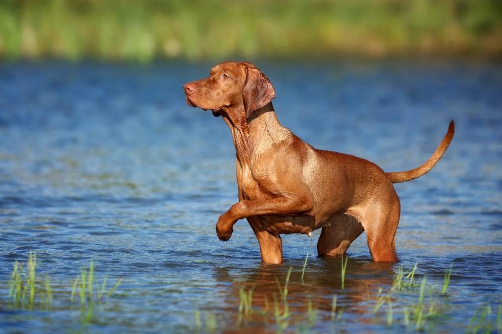 愛犬一直在玩噴水池水柱,甚至不願意離開,讓主人看的哭笑不得(示意圖/達志影像)