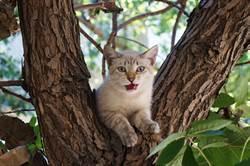 虎斑貓受困樹上下不來 被救時「緊抱小腿」威風盡失