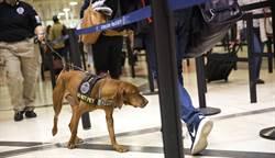 智利訓練警犬偵測新冠肺炎染病者