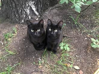 愛貓後院玩突傳尖叫聲 主人驚見牠分裂成兩隻