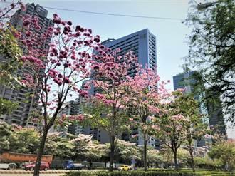 市政路新地標將誕生!聯聚瑞安大廈打造大樹建築