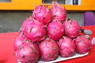 紅龍果鮮甜上市 健康消暑好幫手